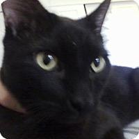 Adopt A Pet :: Squirt - Orange, CA