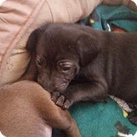 Adopt A Pet :: Quinn - Alpharetta, GA