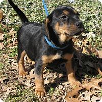 Adopt A Pet :: Marcie - Hartford, CT