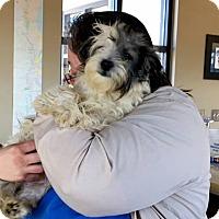 Adopt A Pet :: Sparky - Alpharetta, GA