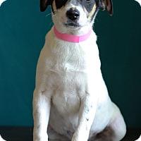 Adopt A Pet :: Autumn - Waldorf, MD