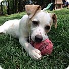 Adopt A Pet :: Baby Willie