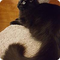 Adopt A Pet :: Ash - Arcadia, CA