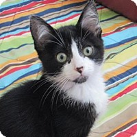 Adopt A Pet :: Orca - Fort Collins, CO