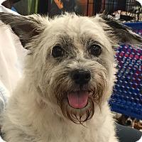 Adopt A Pet :: Lizette - Orlando, FL