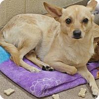 Adopt A Pet :: 1-5 Monkey - Triadelphia, WV