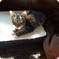 Adopt A Pet :: Orb - San Ramon, CA