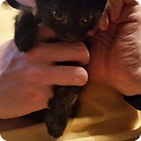 Adopt A Pet :: Aaron - Crocker, MO