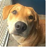 Adopt A Pet :: Rover - Springdale, AR