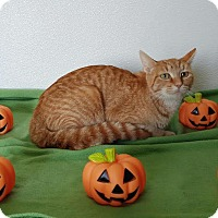 Adopt A Pet :: Tangerine - China, MI