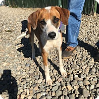 Adopt A Pet :: Smokey - Breinigsville, PA