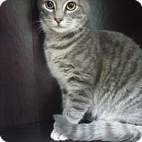 Adopt A Pet :: Franklin D Roosevelt - Albemarle, NC
