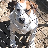 Adopt A Pet :: Peter - Garner, NC