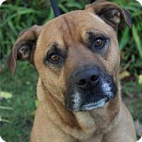 Adopt A Pet :: SCOOBY - Red Bluff, CA