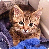 Adopt A Pet :: Will - Concord, NC