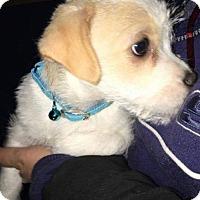 Adopt A Pet :: Fred - Alta Loma, CA