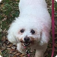 Adopt A Pet :: Sukie - Naples, FL