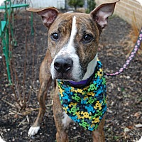 Adopt A Pet :: Warren - Wilmington, DE