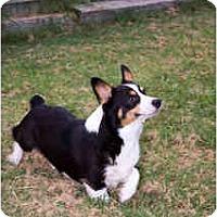 Adopt A Pet :: Boomer - Inola, OK