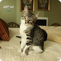 Adopt A Pet :: Jude - Justin, TX
