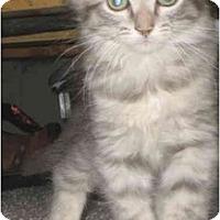 Adopt A Pet :: Mambo - Davis, CA