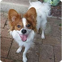 Adopt A Pet :: HUCK - San Diego County, CA