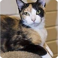 Adopt A Pet :: Priscilla - New Port Richey, FL
