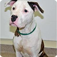 Adopt A Pet :: Dexter - Port Washington, NY