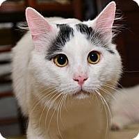 Adopt A Pet :: Chunky Monkey - Davis, CA