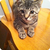 Adopt A Pet :: Rider (RW) - Little Falls, NJ
