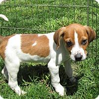 Adopt A Pet :: Mirabella - Middletown, RI