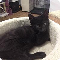 Adopt A Pet :: Nat - Speonk, NY