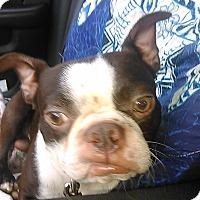 Adopt A Pet :: Cash - Cumberland, MD
