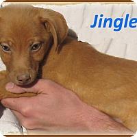 Adopt A Pet :: Jingles-Adoption Pending - Marlborough, MA