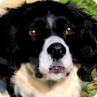Adopt A Pet :: SMUDGE(A