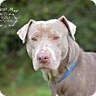 Adopt A Pet :: Buster