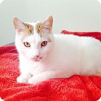 Adopt A Pet :: Samson - Fairfield, CT