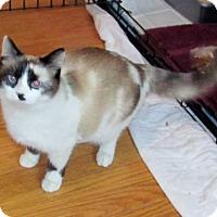 Adopt A Pet :: Mitzie - Westminster, MD