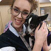Adopt A Pet :: Guido - Ogden, UT
