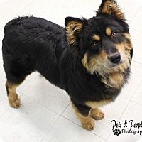Adopt A Pet :: Mushu - Penngrove, CA