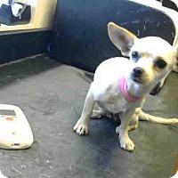Adopt A Pet :: A694131 - Sacramento, CA