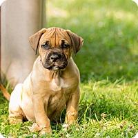 Adopt A Pet :: Pearl(Pink) - Virginia Beach, VA
