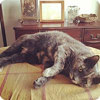 Adopt A Pet :: Cleopatra* - Brooklyn, NY