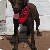 Labrador Retriever Mix Dog for adoption in Oakland, Arkansas - Rocket