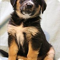 Adopt A Pet :: Watusi - Hagerstown, MD
