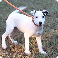 Adopt A Pet :: Sander - Allentown, PA