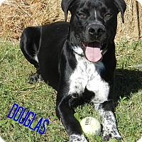 Adopt A Pet :: Douglas - Lawrenceburg, TN