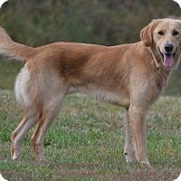 Adopt A Pet :: Leo - Lebanon, MO
