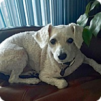 Adopt A Pet :: LITTLE MAN - Melbourne, FL