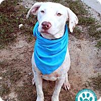 Adopt A Pet :: Charlotte - Kimberton, PA